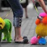 Глэмингованные собаки